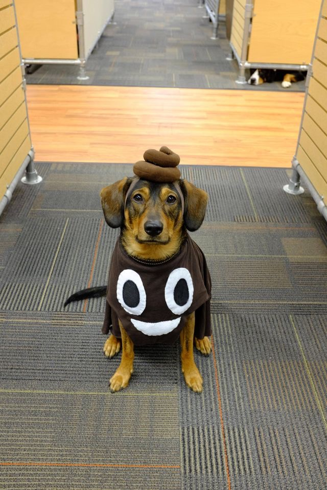halloween fantasia cachorro emoticon