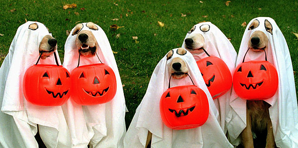halloween fantasia cachorro golden retriever