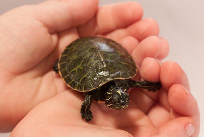 nome para tartaruga