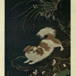 gravura do cachorro pequines