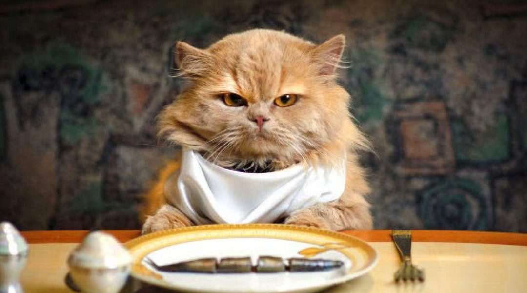 melhor racao para gatos castrados