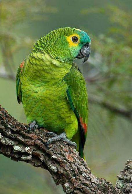 nomes de papagaios