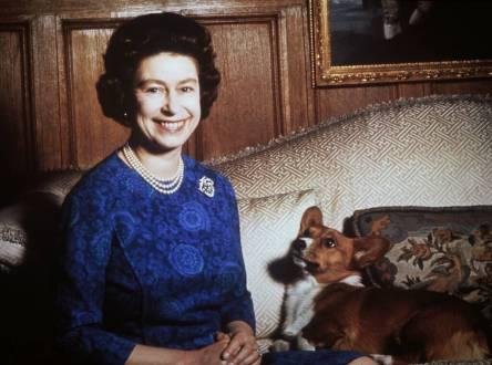 corgi o cachorro da rainha