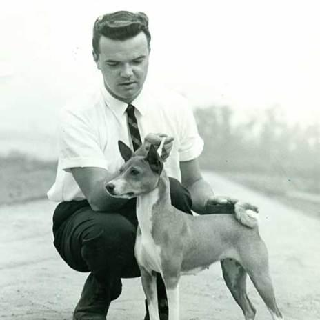 cão basenji exposição