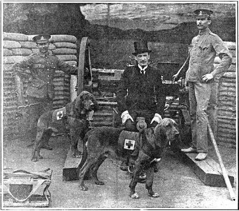 bloodhound-guerras
