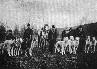 cachorro borzoi historia