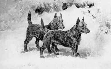 Scottish Terrier historia