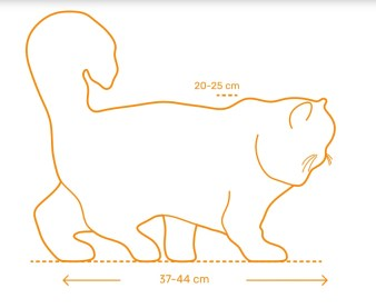 gato persa tamanho