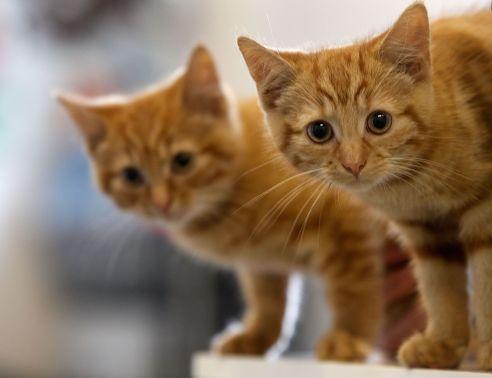 gatos com berne o que fazer