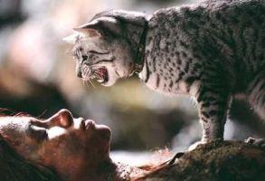 Mau Egípcio Filme Mulher Gato