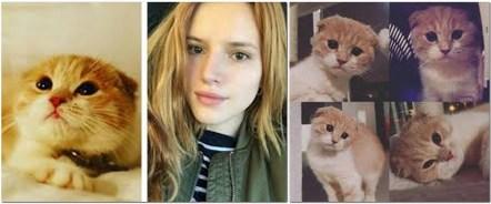 Gato Scottish Fold Bella Thorne