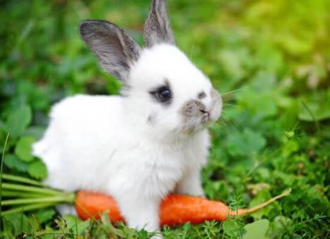 nomes de coelho