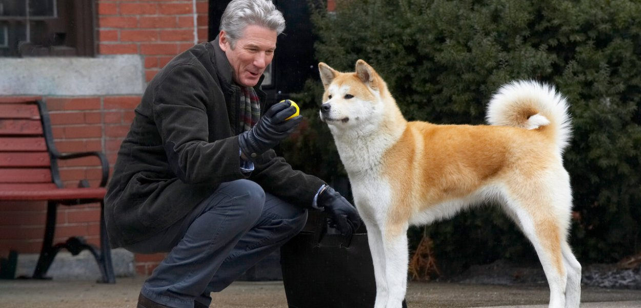 cachorro-hachiko