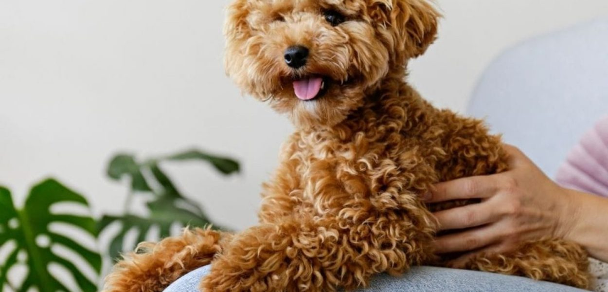 cachorro para pessoa alergica