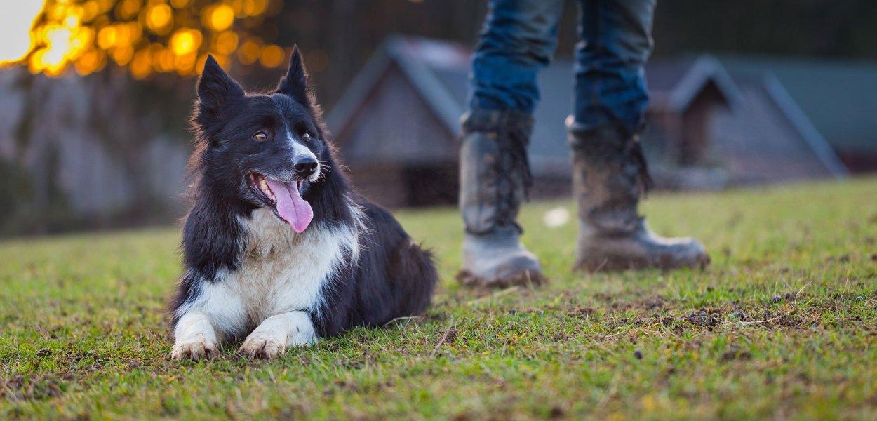 racas de cachorro para fazenda