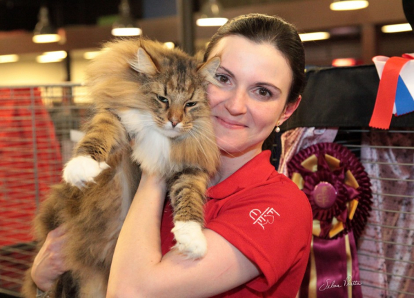 Gato Norueguês da Floresta prêmio