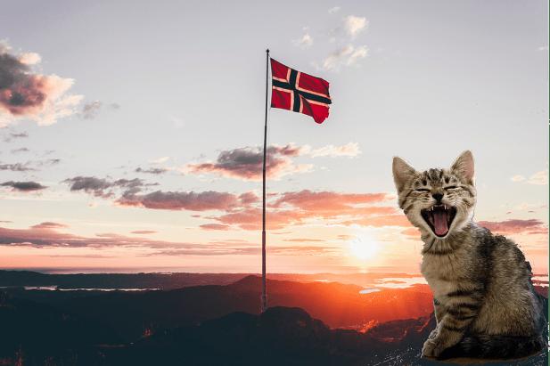 gato noruegues da floresta preco