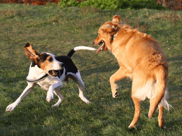 cachorros se divertindo