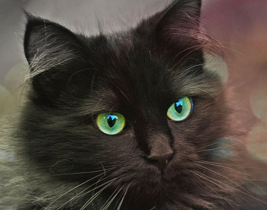 Gato close olhos verdes