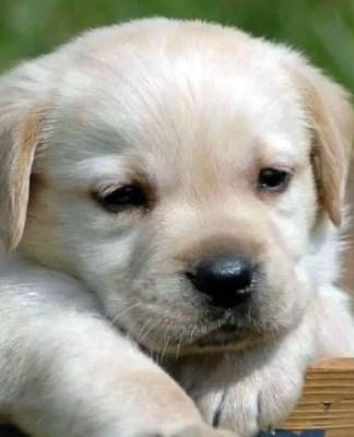 Dog Training Supplies