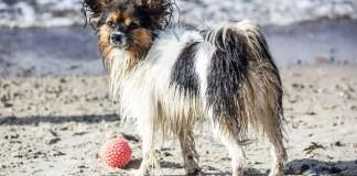 Dog that needs brushing