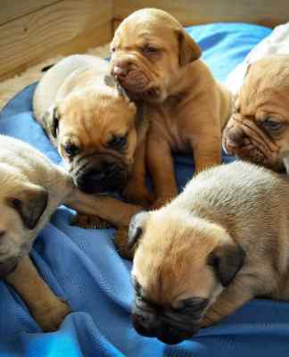 trying to choose a puppy - they are all cute