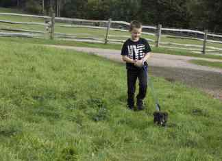 Child leash training a puppy
