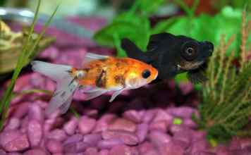 Two tropical fish have been fed