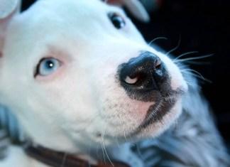 Pitfall dog training