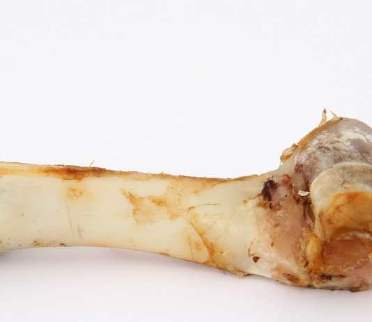 A bone for a dog