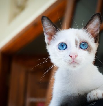 Potty training cat