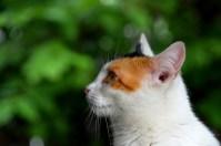 cat-4289959_1920
