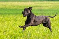 dog-6584105_1920