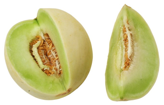 Can Hamsters Eat Honeydew Melon