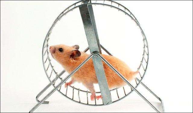 Hamster Wheels - Hamster Toy Ideas