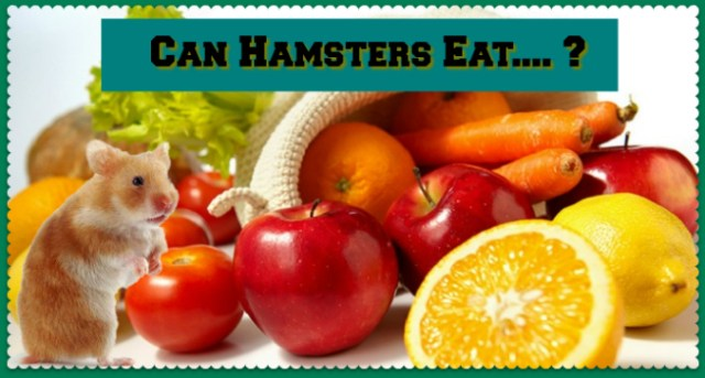 What Fruits can a Hamster Eat