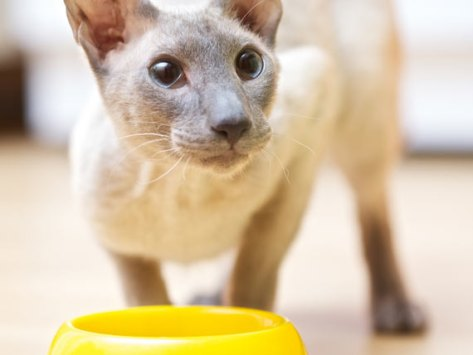 4 Reasons Life Stage Diets Help Improve Cat Health
