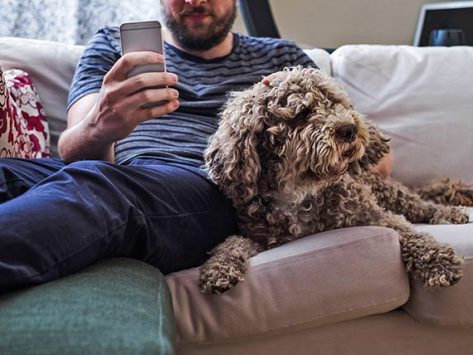 4 Surprising Flea Diseases You Need to Know