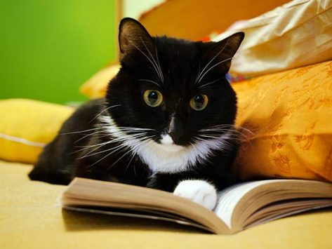 4 Facts About Your Cat's Brain