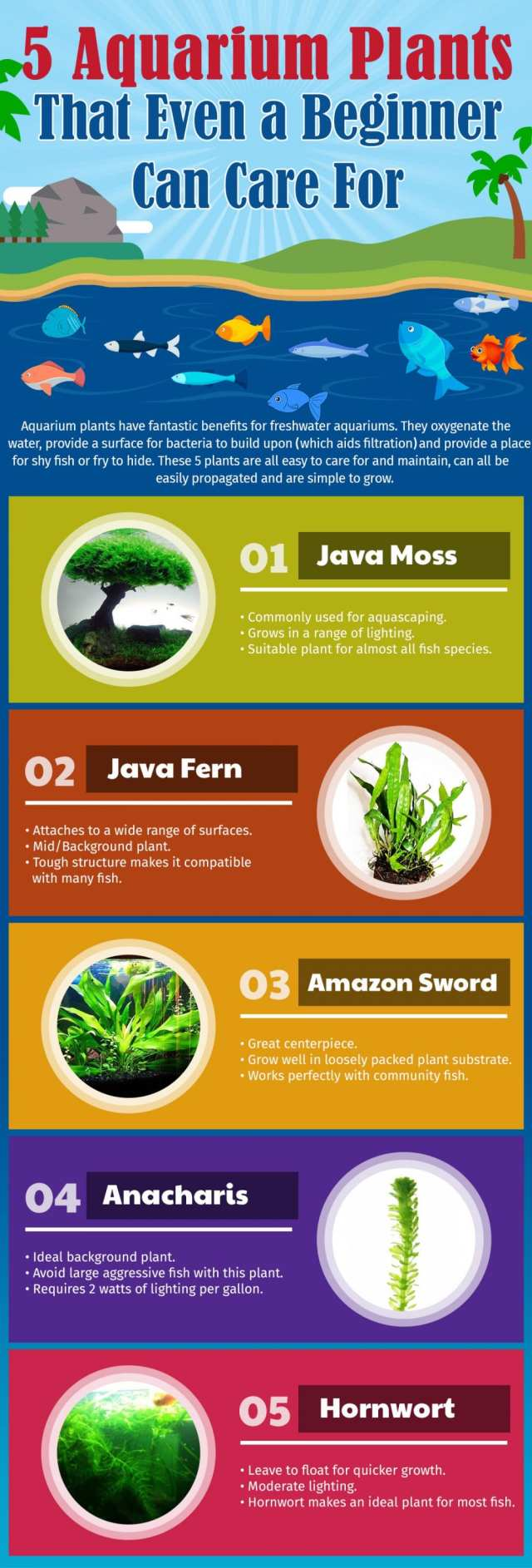 5 Live Aquarium Plants That Even a Beginner Can Care For