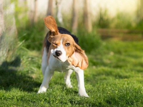 5 Signs Your Dog Has Ticks
