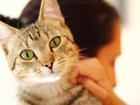 5 Tips for Treating Acne in Cats and Dogs