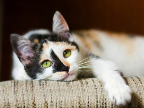 5 Tips to Keep Your Senior Cat Healthy