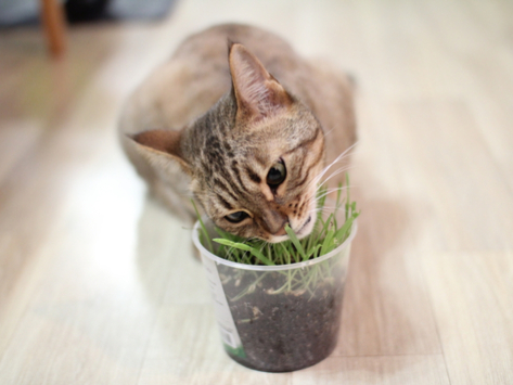 5 Types of Cat Grass You Can Grow