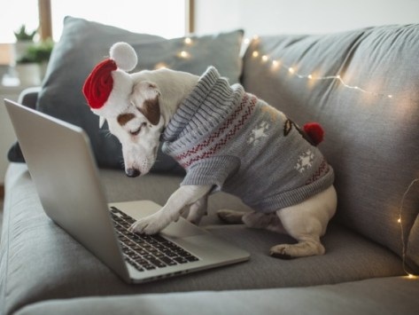 8 Best Black Friday Deals for New Puppy Owners