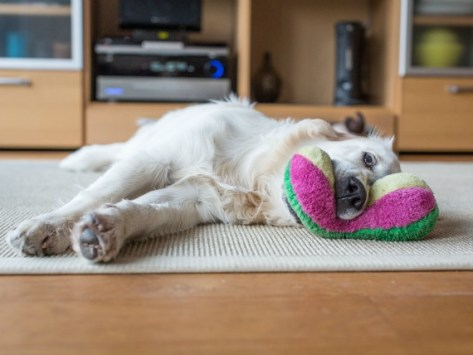 A Cleaner, Greener Home for You and Your Pet