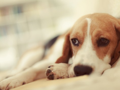 Can Dogs Have Bipolar Disorder?