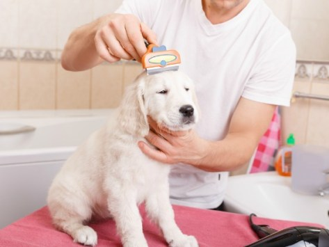 DIY Tips for Grooming a Dog at Home