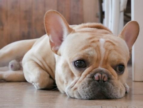 Do Dogs Feel Sadness?