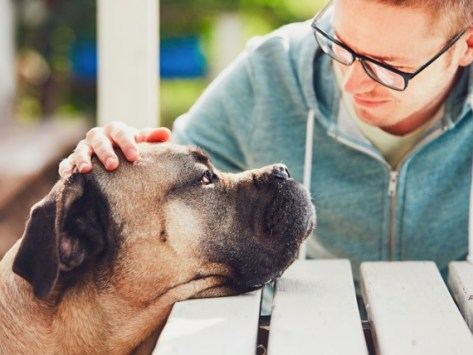 Do Dogs Have a Sixth Sense That Helps Them Read Your Mood?